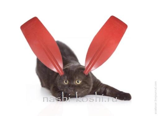 веслоухий кот