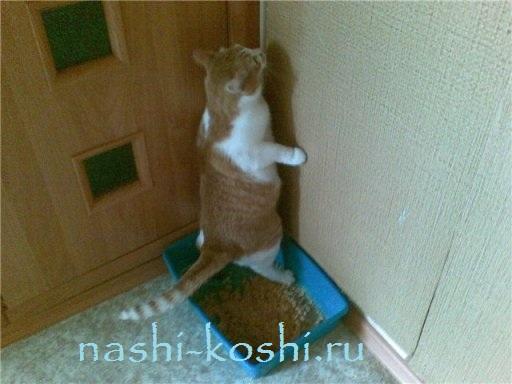приучить котенка к туалету