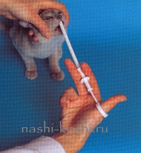 что можно дать кошке от аллергии