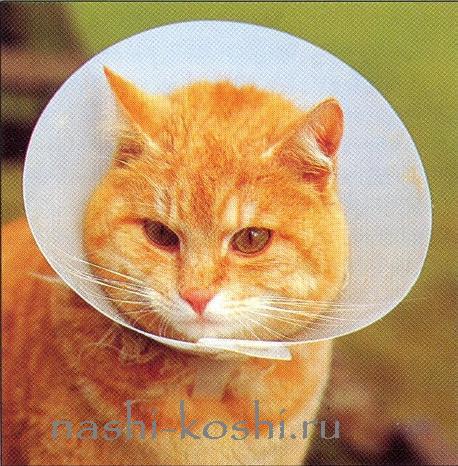 укусы и другие раны у кошки