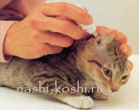 болезни ушей у кошки