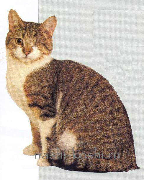 кашель у кошки; кошачий грипп