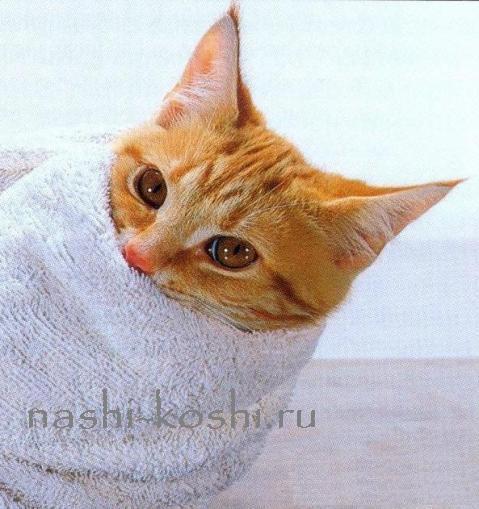 дать кошке лекарство