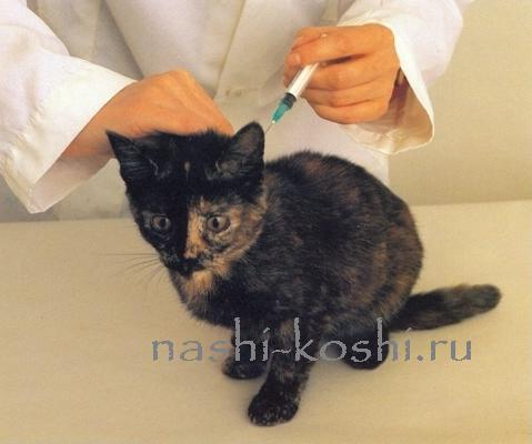 прививки кошке
