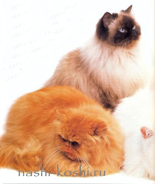 какую кошку выбрать