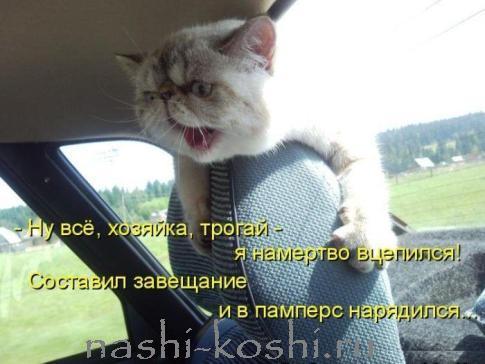 приучаем кошку к автомобилю