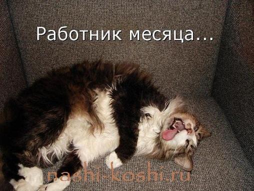 кошка работает