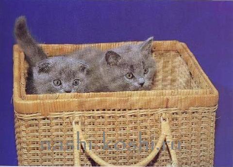 перевозим кошку в новый дом