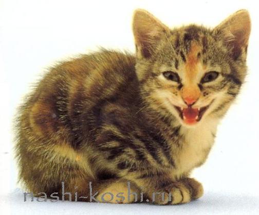кошачий язык