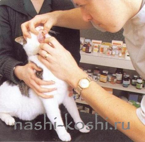 зубы кошки; зубной камень