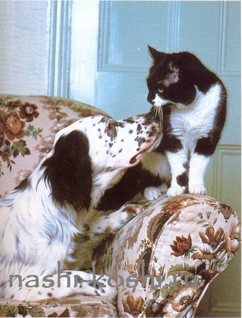 познакомить и подружить кошку
