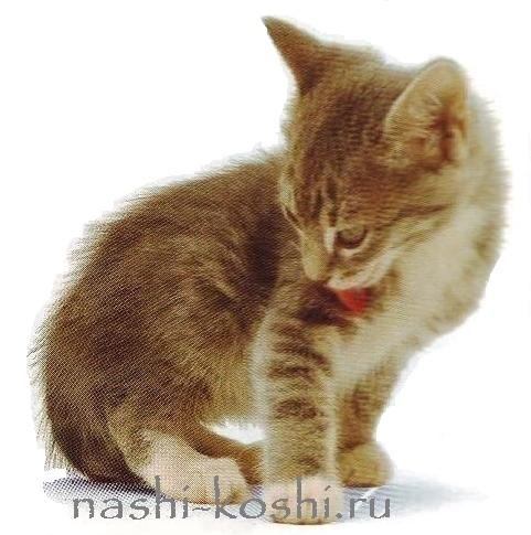 беспородные котята