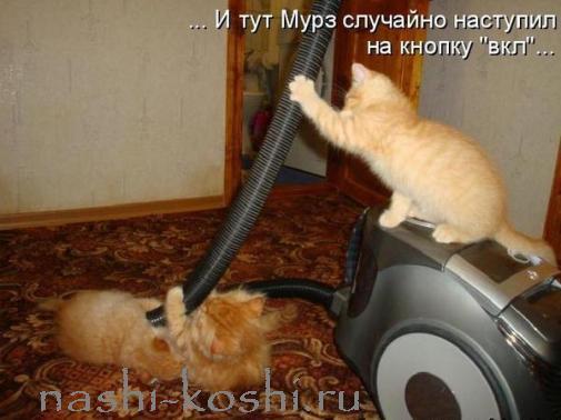 кошки боятся пылесоса