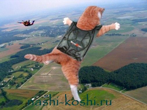 кошки-мышеловки