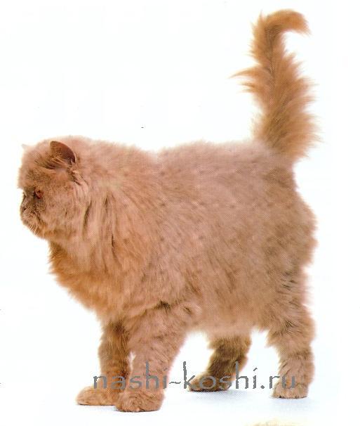 говорит и показывает кошкин хвост