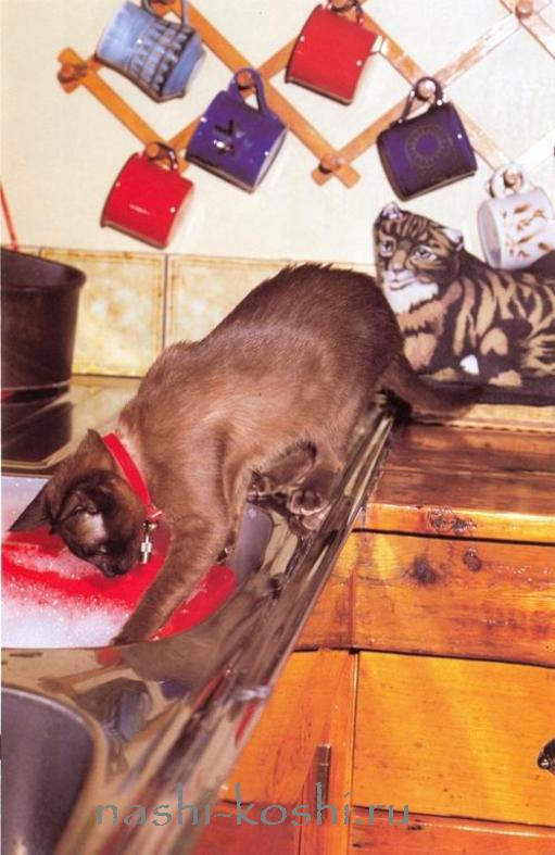 опасности в доме. кухня