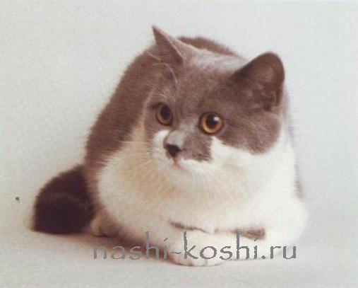 происхождение пород кошек
