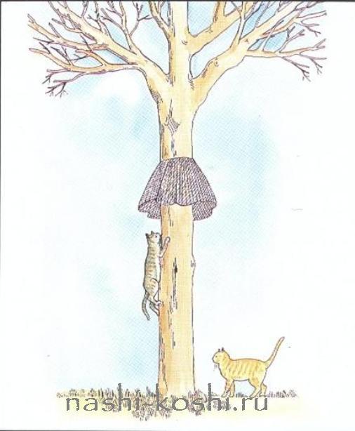 деревья и вода