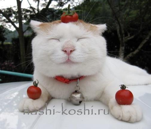 самый ленивый кот