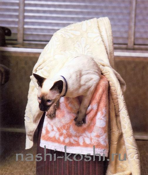 опасности в доме; ванная комната; кот в стиральной машине