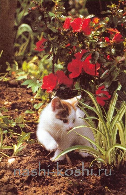 опасности в доме. ядовитые растения