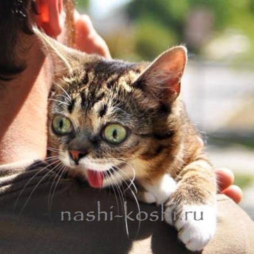 самая удивительная кошка