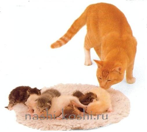 обоняние кошки