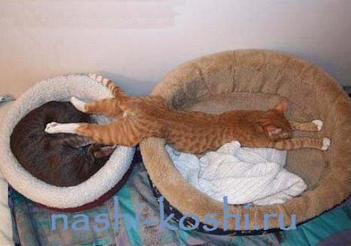 сколько спит кошка