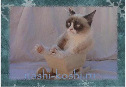 грустный кот Тард