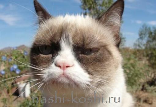 недовольный кот Тард