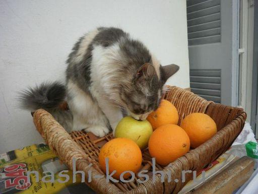 вкус кошки