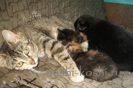 кошка усыновила щенка
