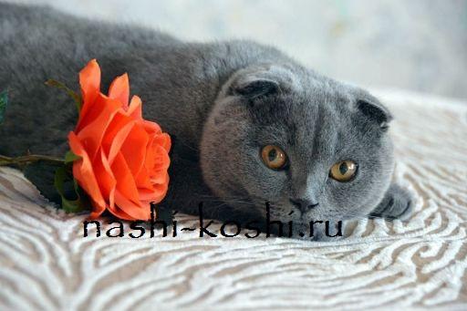память и чувства кошки