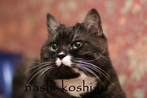 зачем кошке усы; осязание кошки