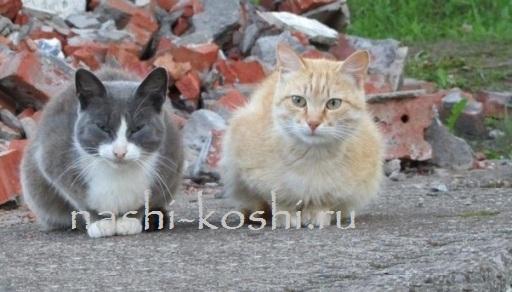 чувствительность кошек к вибрации; осязание
