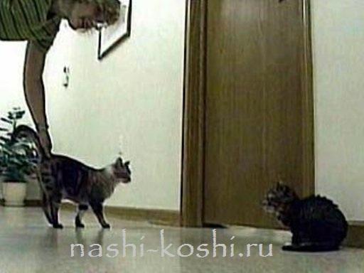 самый маленький кот