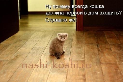 пускать кошку первой