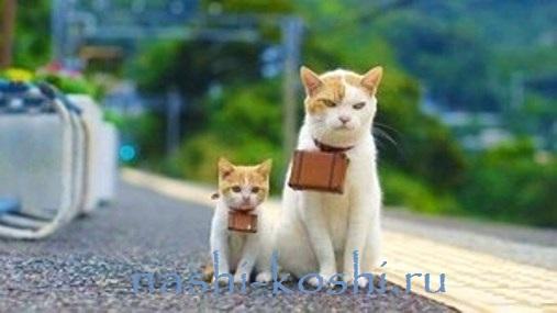 кот-путешественник