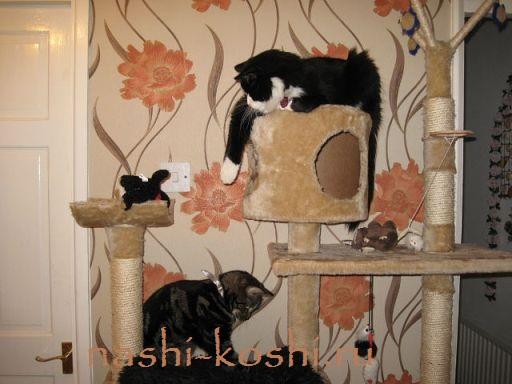 игровой комплекс для кошки своими руками