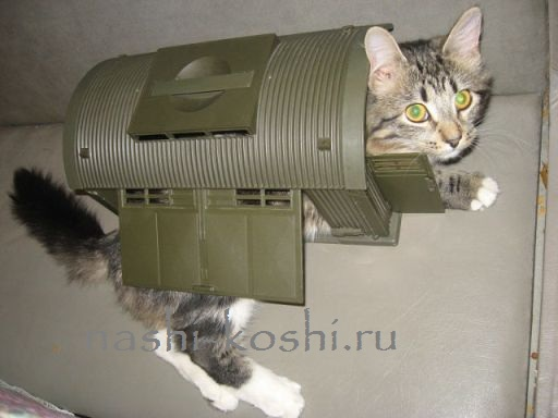 Делаем домики для кошек своими руками
