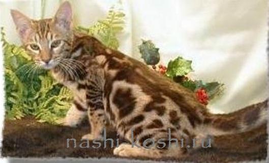 джунгала кошка