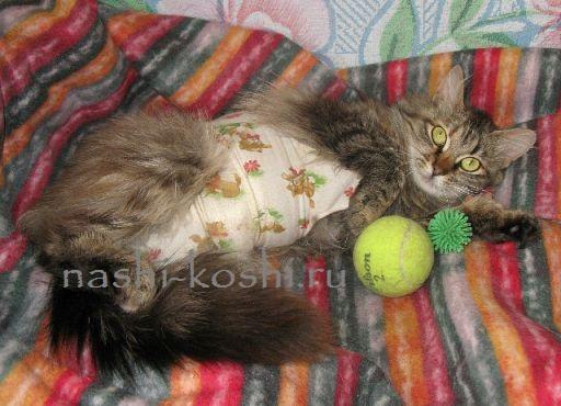послеоперационная попона (бандаж) для кошки