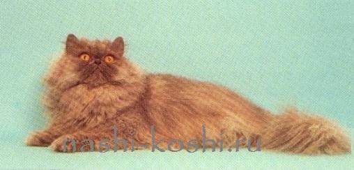 гипертиреоз у кошки