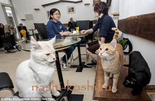 кошачье кафе