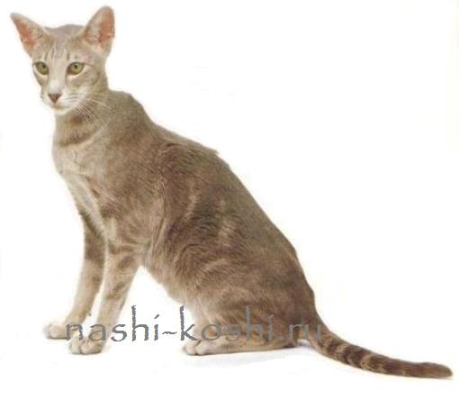 кошка внезапно сильно похудела
