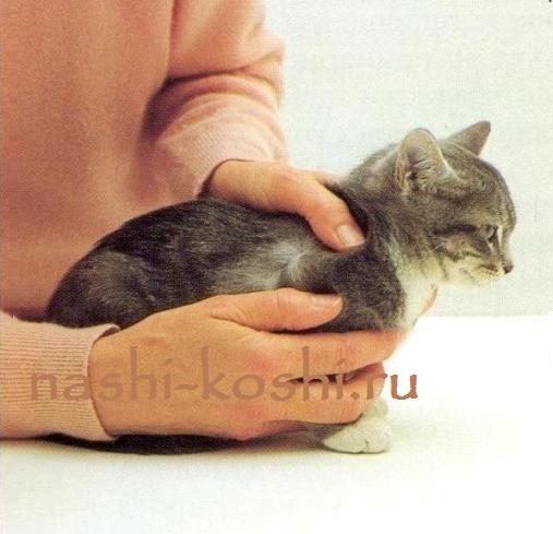 как определить, есть ли у кошки блохи