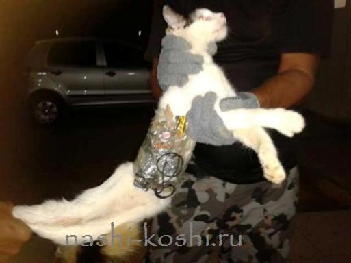 кот-контрабандист схвачен в тьрьме Бразилии