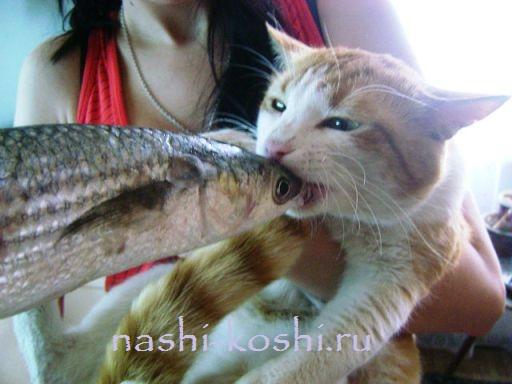 Можно ли есть сырую рыбу котам