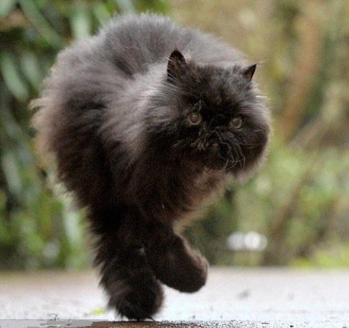 кошка на двух ногах
