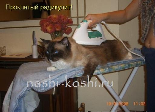гладим кошку правильно
